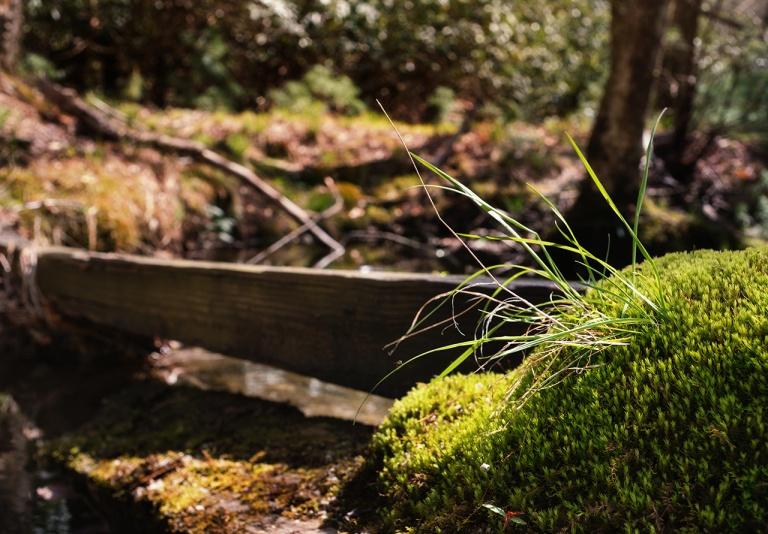 Sony A7RmkII w/ Konica Hexanon AR 35mm f/2.8